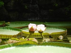 fiore di loto ischia 2008